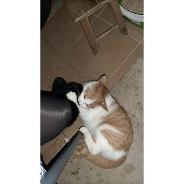 Za darmo Oddam kotki w dobre ręce