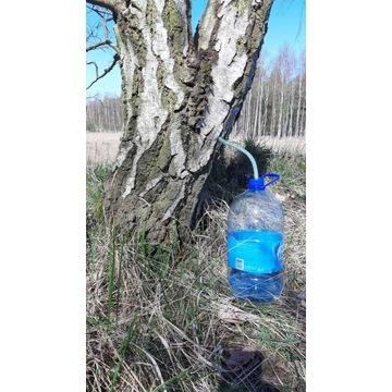 Mrożony eko sok z brzozy odporność vitalność