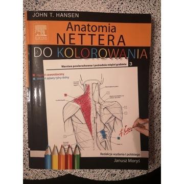 Anatomia Nettera do kolorowania - wypełniona