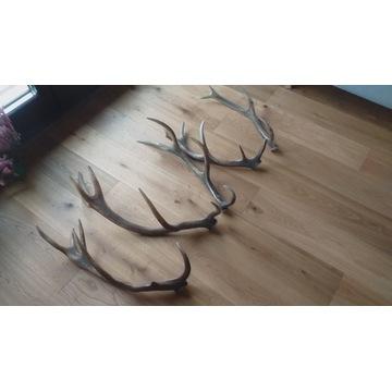 Zrzuty jelenia