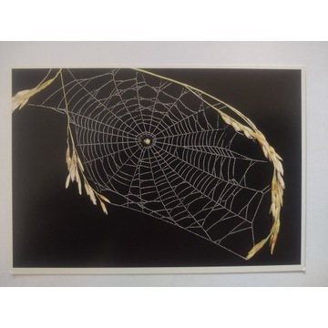 Pocztówka Stefan Richter spider web pająk
