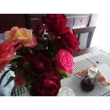 Róże wilkokwitowe 6 sztuk każda inna