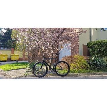 Rower ostre koło single speed czarny