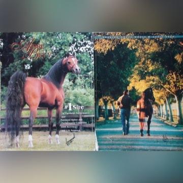 """""""ARABIAN HORSE WORLD"""" 4/2000, koń, konie arabskie"""
