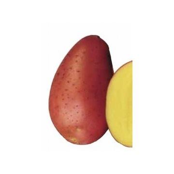 Ziemniaki czerwone RED FANTASY 15kg