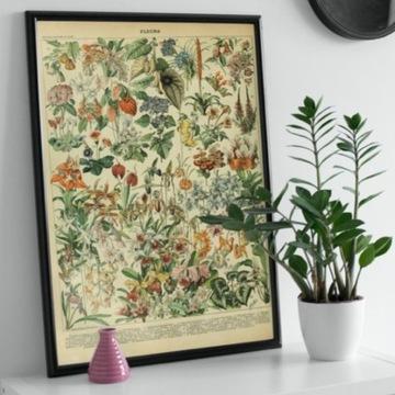 Plakat vintage zbór kwiatów polnych rysowanych