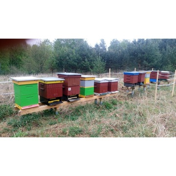 Rodziny pszczele z ulami