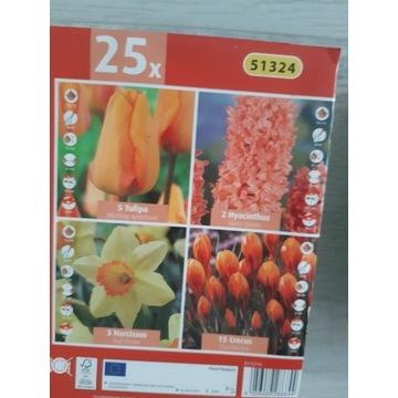 Cebulki w zestawie hiacynt tulipan krokus narcyz