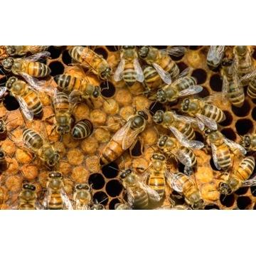Rodziny pszczele wraz z ulami