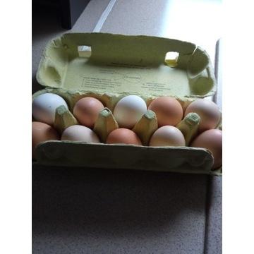 Jaja z wolnego wybiegu 30szt.