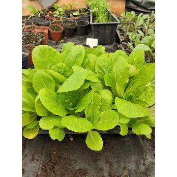 Zastaw sadzonek warzyw