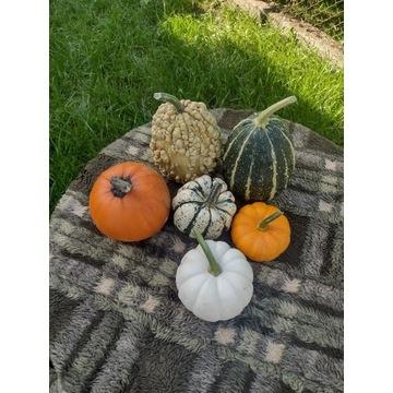 Jesienny zestaw - dynia ozdobna owoce z pola