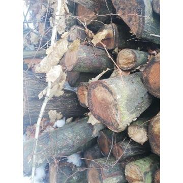 Drewno kominkowe opałowe opał drzewo