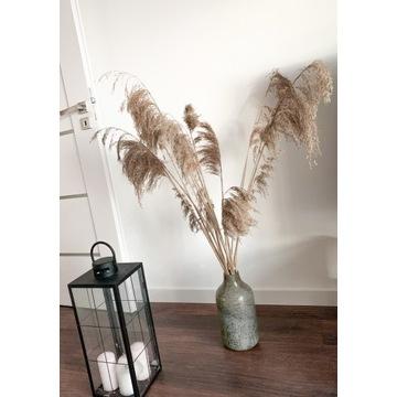 Trawa pampasowa , bukiet ozdobny , trzcina 120cm