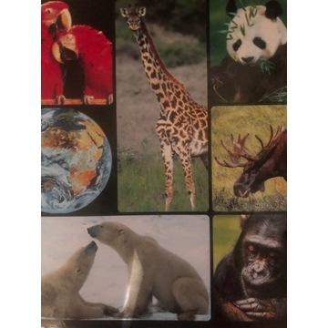 Encyklopedia zwierząt / segregatory