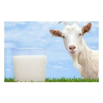 Mleko kozie ekologiczne standardy