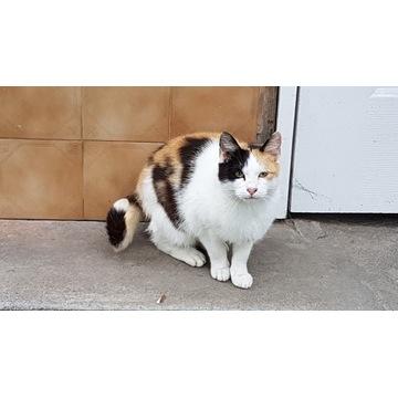 Śliczna zadbana kotka szuka nowego domu