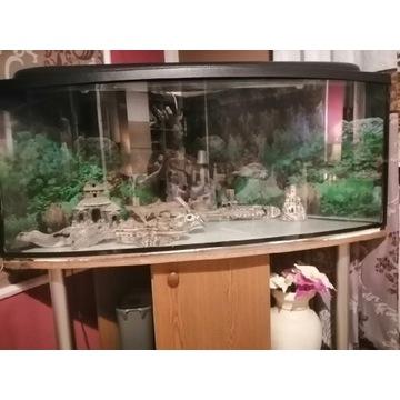 Akwarium 500L NAROŻNE +SZAFKA