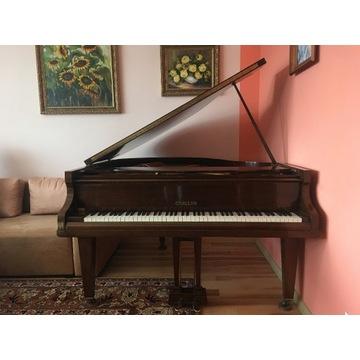 Fortepian CHALLEN 156 cm