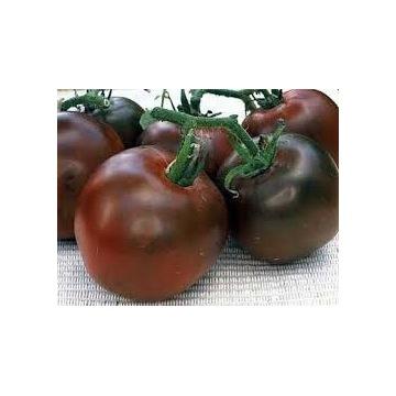 Pomidor Czarny Książe - sadzonki doniczkowe