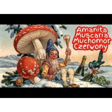 Amanita Muscaria-Muchomor czerwony