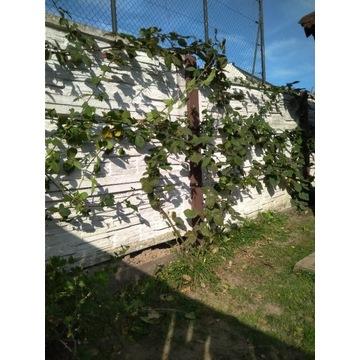 Uchwyt do płotu płot pod winogrona fasolę itp