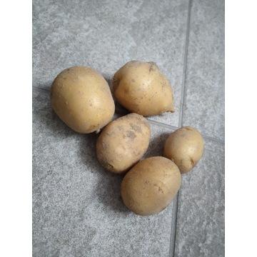 Ziemniaki denar 2 zł za kg