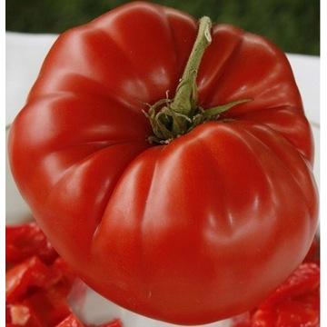 pomidor aussie