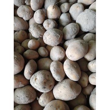 Ziemniaki 10 kg odmiana Owacja WYSYŁKA