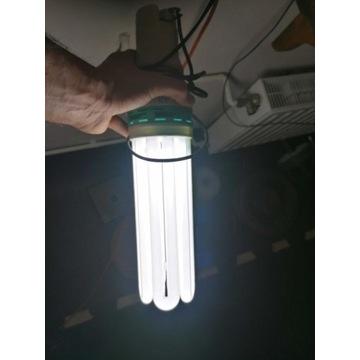 Lampy Elektrox 125W 250W do uprawy roślin