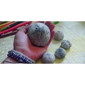 Kolekcja skamieniale jezowce bdb cena za all