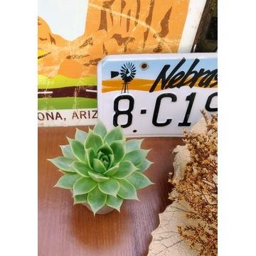 Sukulenty/ kaktusy