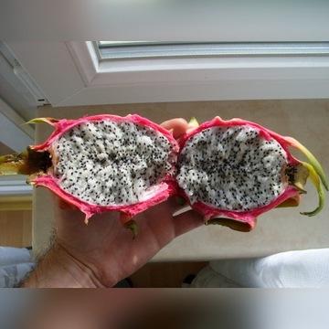 Sadzonki Pitaja Smoczy Owoc Pitahaya