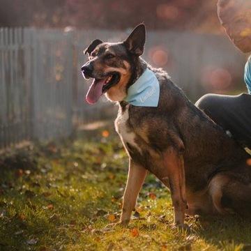 Henio - Silny duży pies dla aktywnych do adopcji!