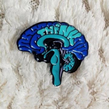 medycyna lekarz student lekarski mózg neurologia