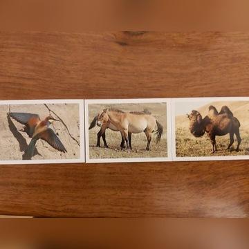 Naklejki do albumu Zwierzęta Świata E. Leclerc