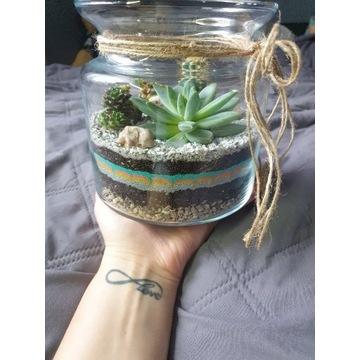 Sukulenty /kaktus w szkle - żywa kompozycja