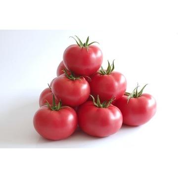 Pomidor malinowy Manistella F1 - nasiona