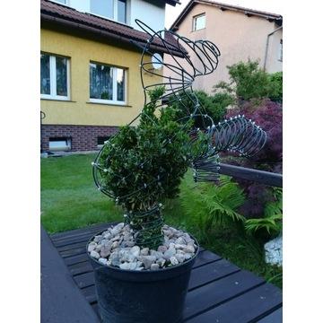 Topiary, formowane rośliny