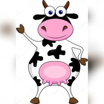 cielaki cielęta byczki HF