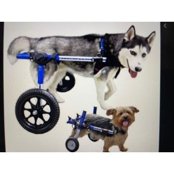 Wózki inwalidzkie dla psów i kotów (numer3)