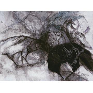 Obraz - Kruki i wrony, 30x40