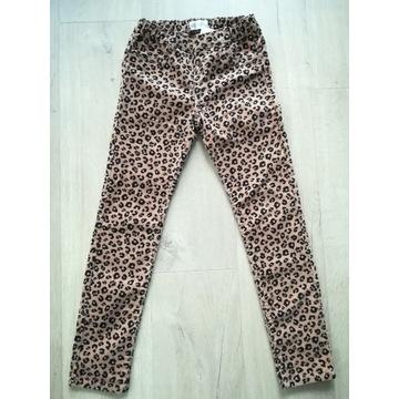 H&M spodnie sztruksowe panterka 134cm OKAZJA!