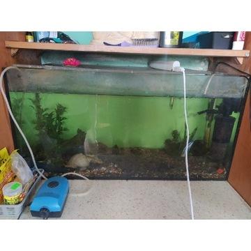 Akwarium z rybkami i osprzętem