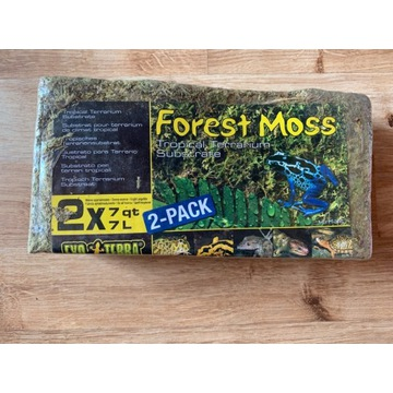 Mech Forest moss, do terrarium
