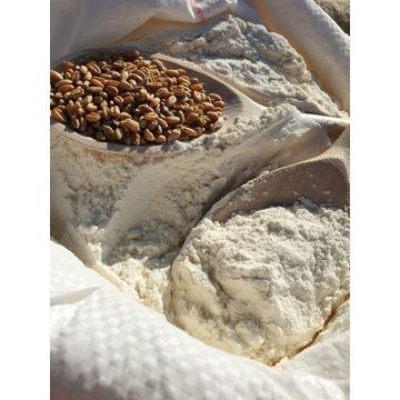 Mąka pszenna TYP 750 CHLEBOWA 25kg z MŁYNA