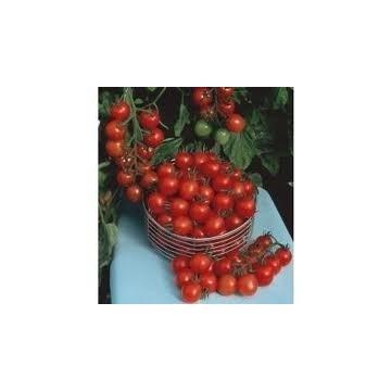 Pomidor KOKTAJLOWY CZERWONY- sadzonki doniczkowe