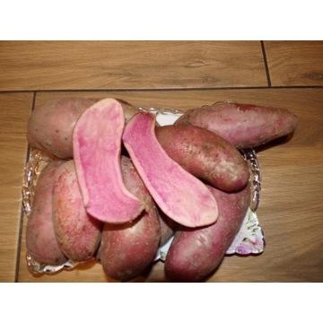 ziemniaki jadalne czerwone odmiany ROTE EMMA 5 kg
