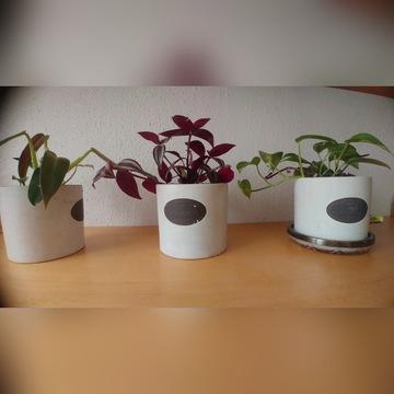 Rośliny doniczkowe 3 szt. + wkładki ceram.