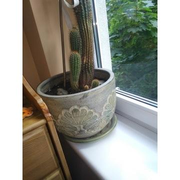Kaktus wraz z donicą
